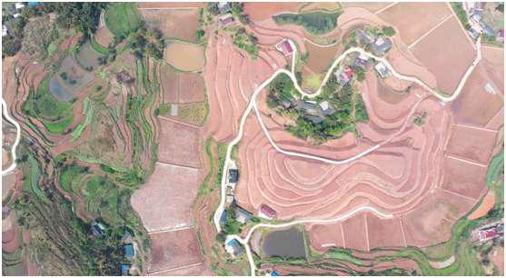 南溪区仙临镇全面实施乡村振兴战略产业融合高质量发展