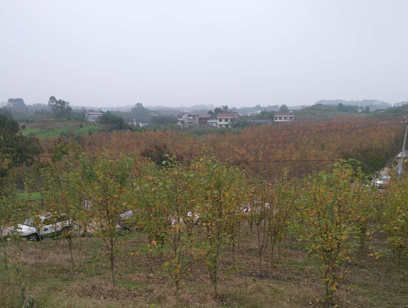 发展中的内江市中区永安镇新房村