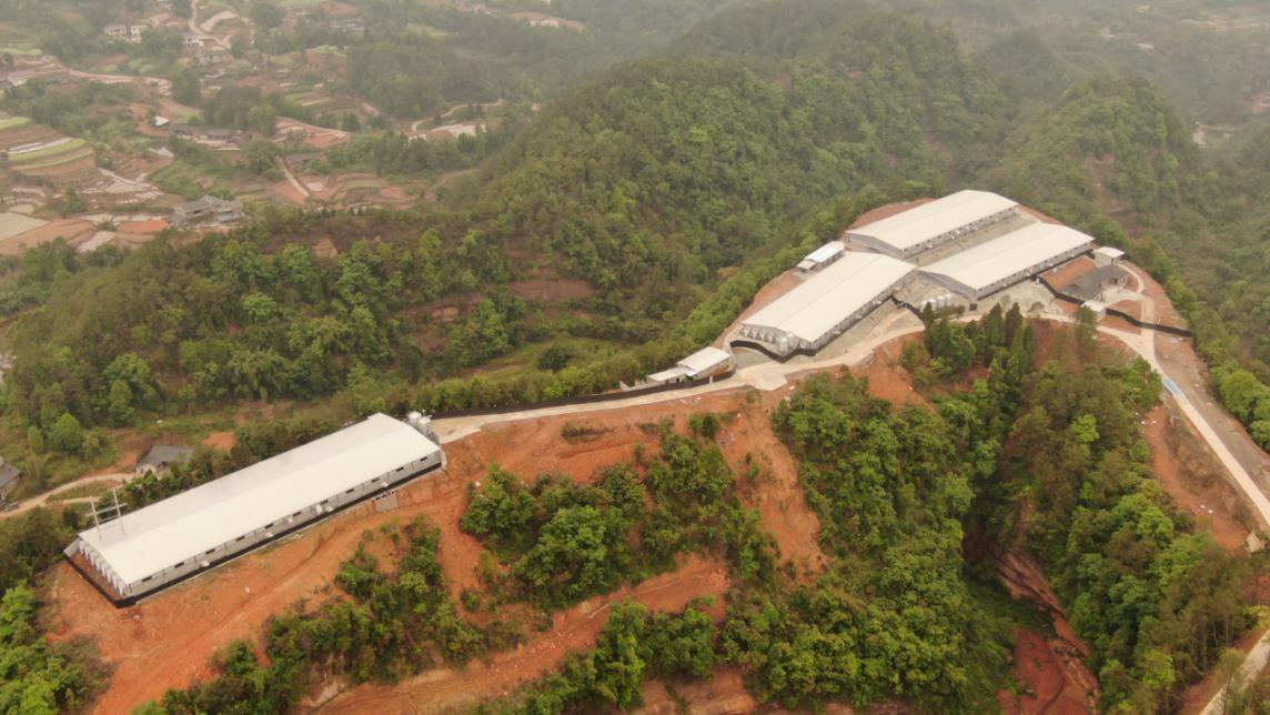 犍为以项目促转型,推进生猪产业现代化